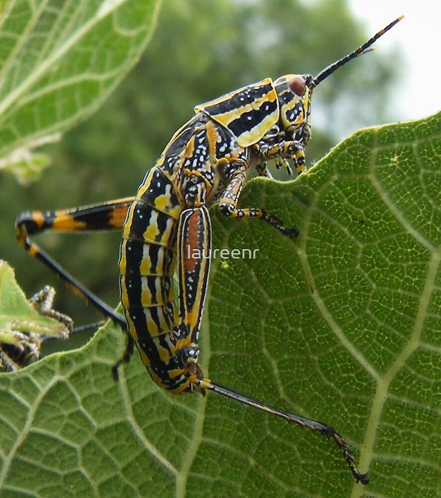 Grasshopper by laureenr