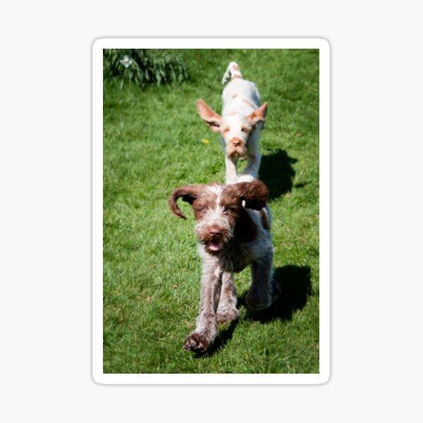 Springtime Spinoni puppies Sticker