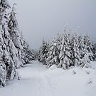 Winter in Owl Mountains by Dominika Aniola