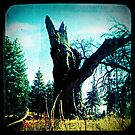 Ttv: Tree Dead Center by PeggySue67