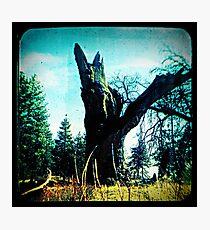 Ttv: Tree Dead Center Photographic Print