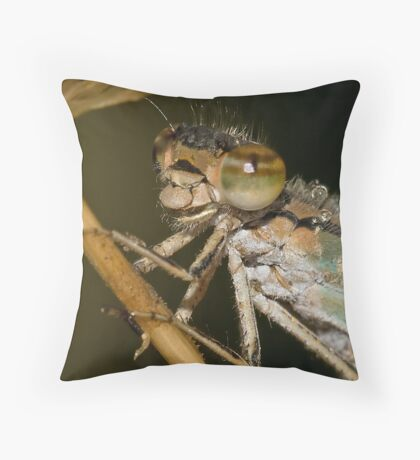 Portrait Of A Dragonfly Throw Pillow