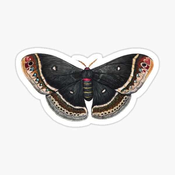 Calleta Silkmoth  (Eupackardia calleta) Sticker