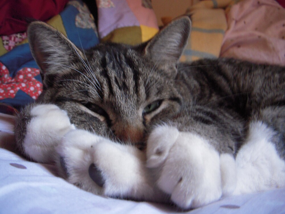 Nothing but Feets by Tama Blough