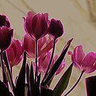 Tulips All Aglow by Greta  McLaughlin