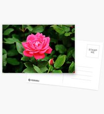 My Love is Like a Red, Red Rose Postcards