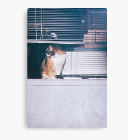 Cat at a shop window Canvas Print