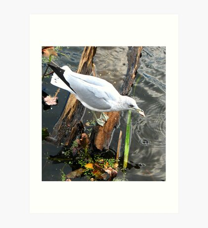 Eating Seagull Art Print