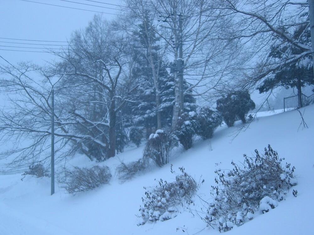 Blue Winter by profusemoose