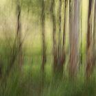 Verwunschener Wald ... by Angelika  Vogel