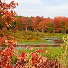 Fall Foliage, Gardner MA by Rebecca Bryson