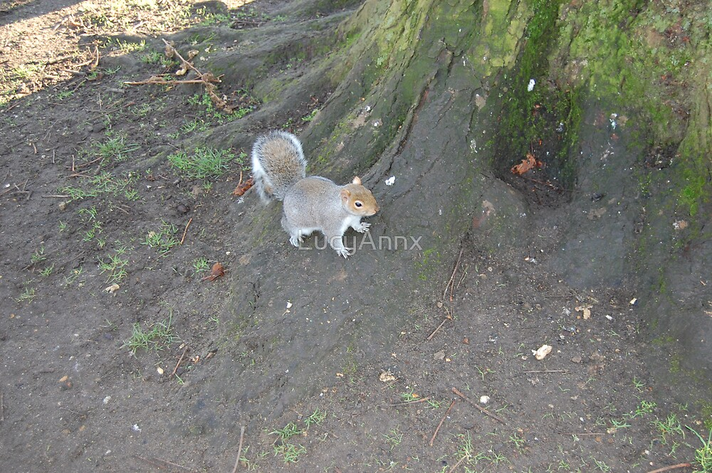 Squirell by LucyAnnx