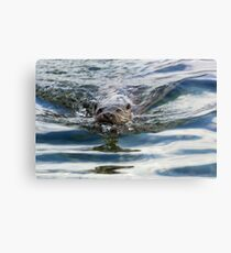 Otter swimming Canvas Print