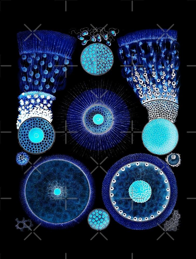 Radiolaria or Radiozoa as Art by diane  addis