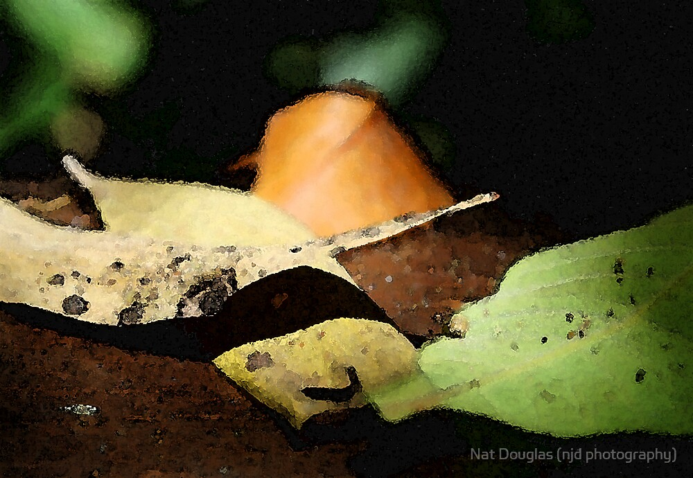 watercolour leaves by Nat Douglas (njd photography)
