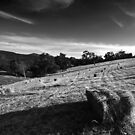 Running in the Bales by Mike Emmett