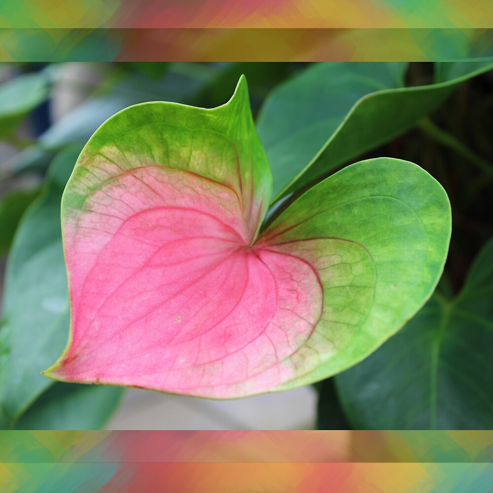 Pink and Green Leaf by Christine Mullis