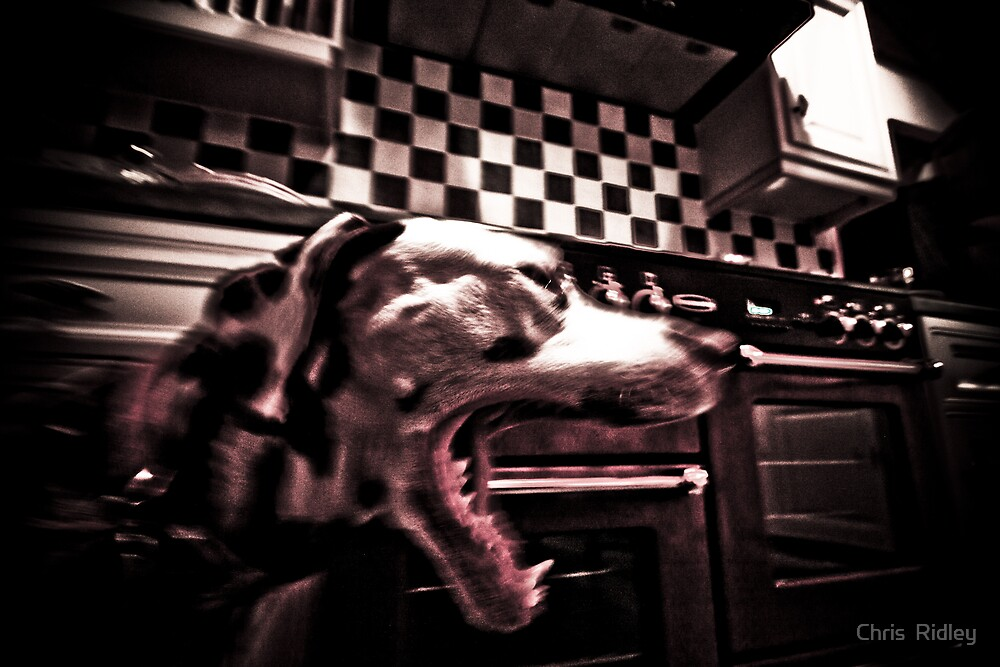 The Dalmation Snarl by Chris  Ridley