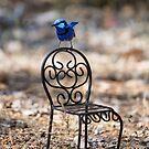 Curious Blue by Ladyshark