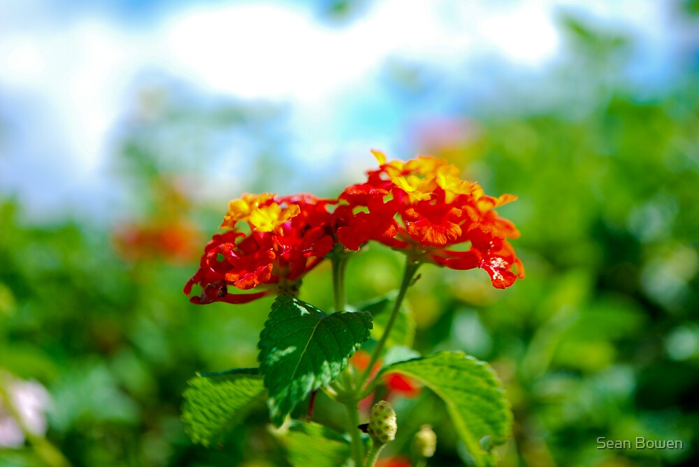 Flowers by Sean Bowen