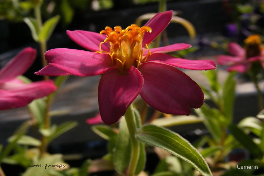 Flower by Camerin