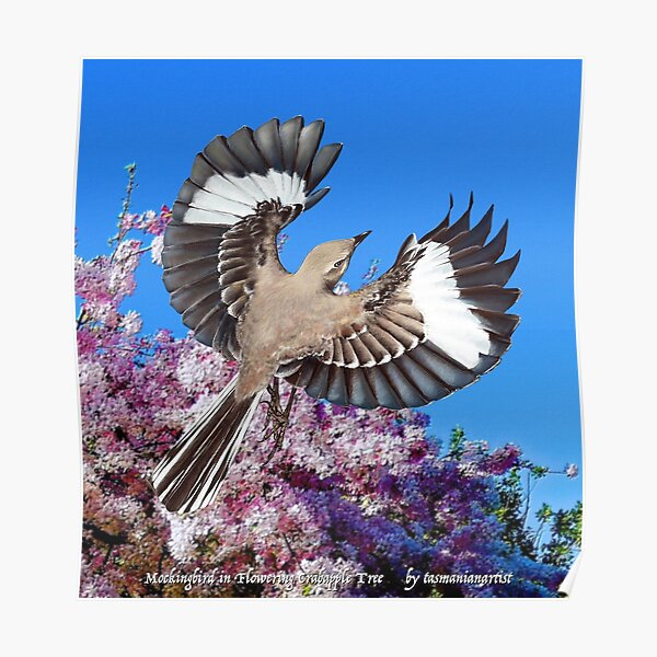 GALLIMAUFRY ~ JUST PHOTOS ~ SCENES & SCENERY ~ D1G1TAL-M00DZ ~ Mockingbird in Flowering Crabapple Tree by tasmanianartist Poster