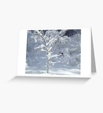 Delicate Delight  ^ Greeting Card