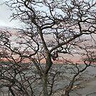Evening, sunset, evening glow, setting sun rays, windows, pink clouds by znamenski