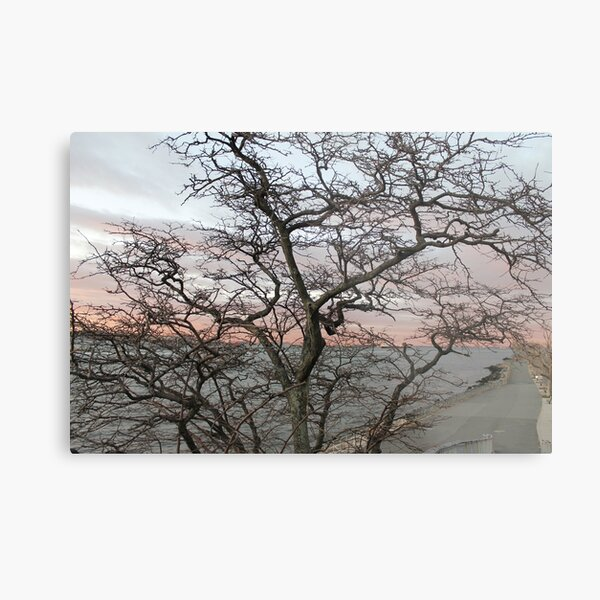 Sunset, pink clouds, exotic curved branches of a tree, beautiful view Metal Print