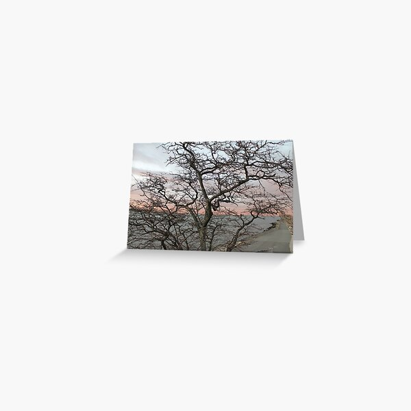 Sunset, pink clouds, exotic curved branches of a tree, beautiful view Greeting Card