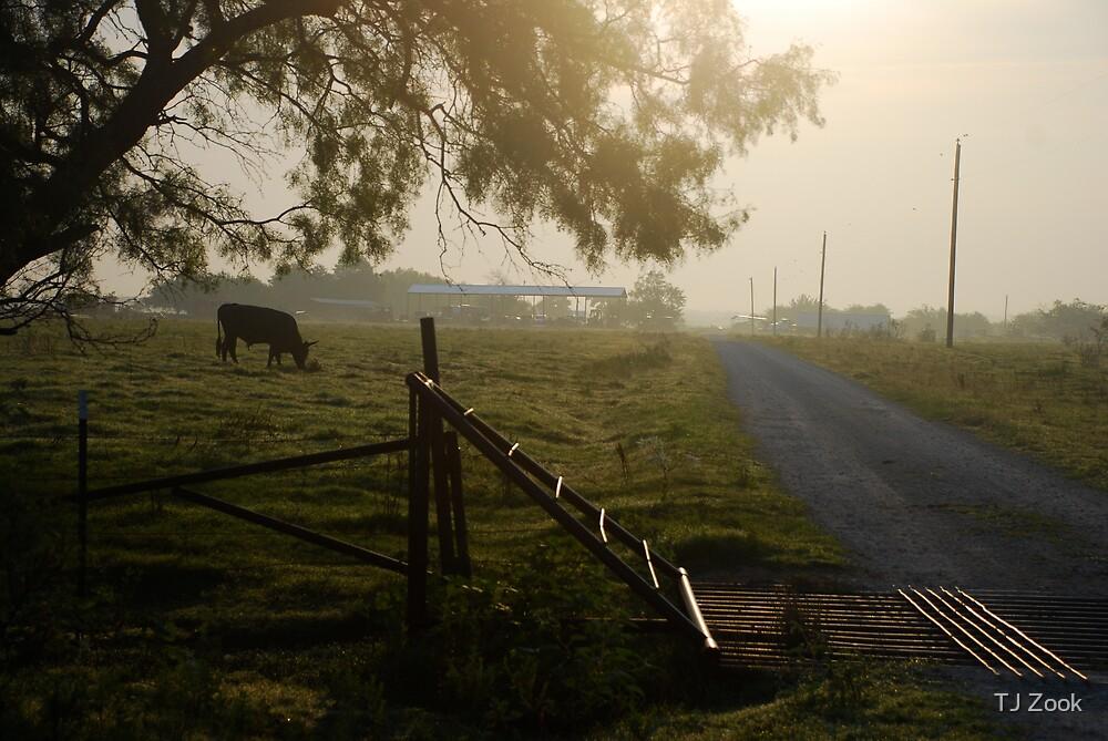 Cattle Guard Sunrise by TJ Zook