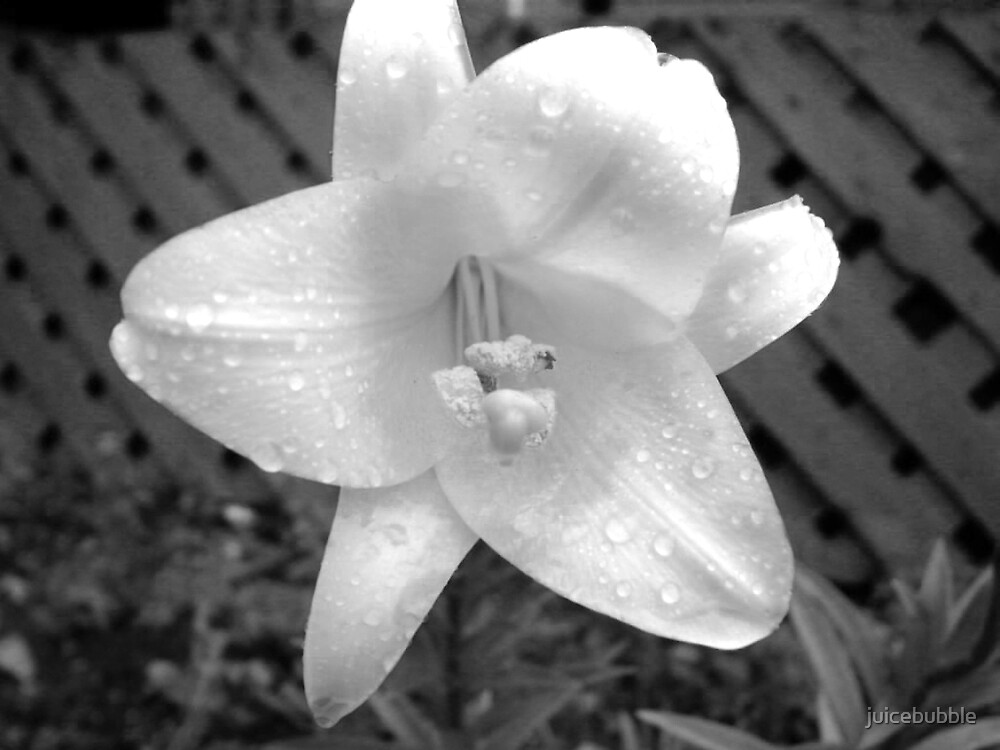 black and white flower by juicebubble