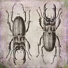 Grunge Style Stag Beetle by artsandsoul