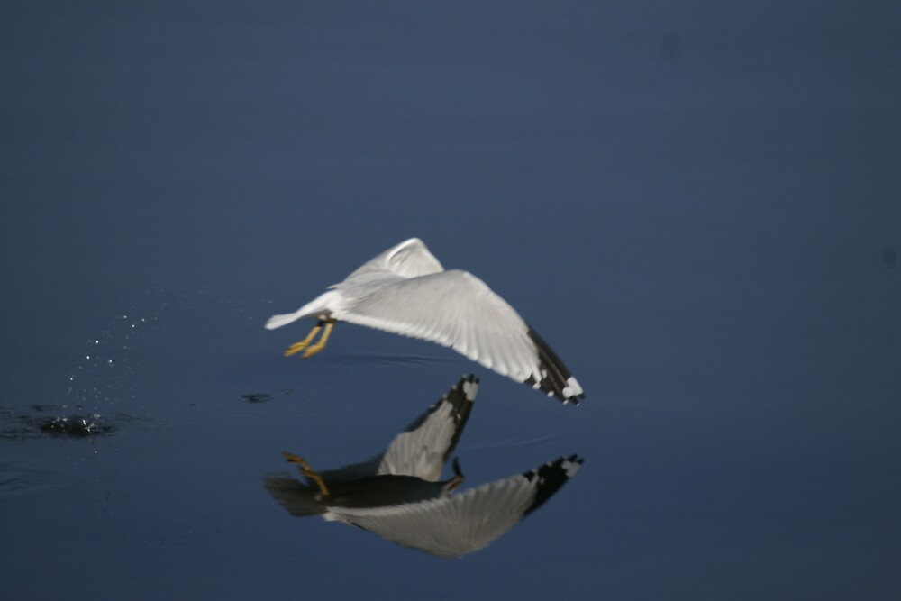 Reflections on the wing by manchesterjohn