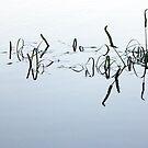 Stillness by Shelley Heath