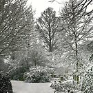 Winter Landscape by Anne-Marie Bokslag