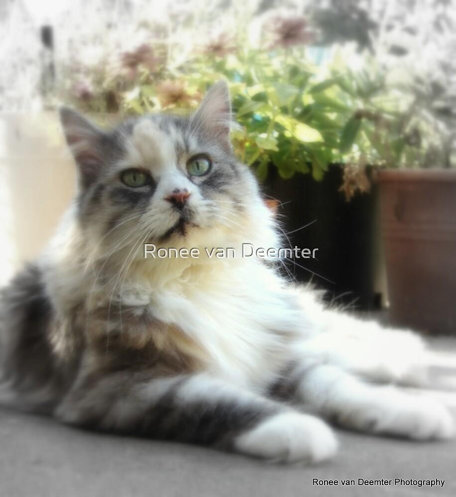 Its a cat's life by Ronee van Deemter