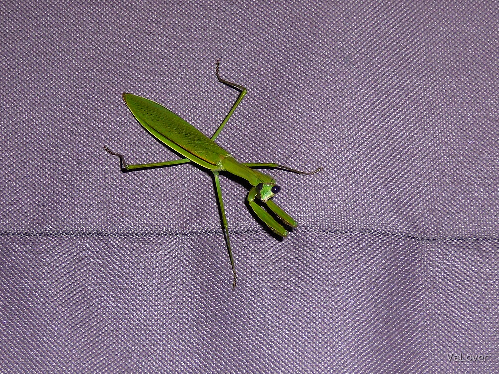 Praing Mantis! by VaLover