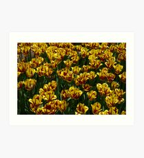 Tulip Festival Art Print