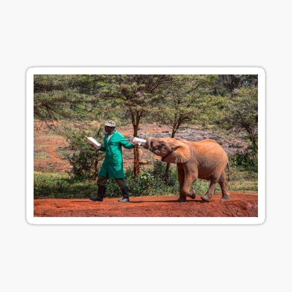 Kenya. Nairobi. David Sheldrick Wildlife Trust. Elephant Orphanage. Sticker