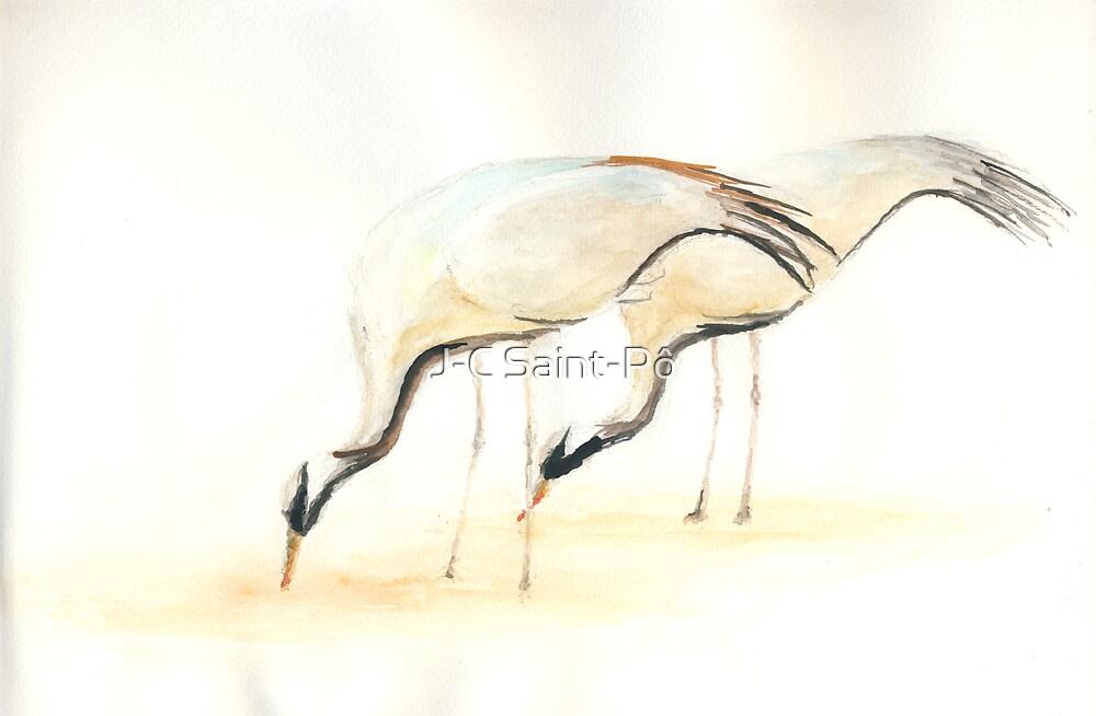 Love Birds by J-C Saint-Pô