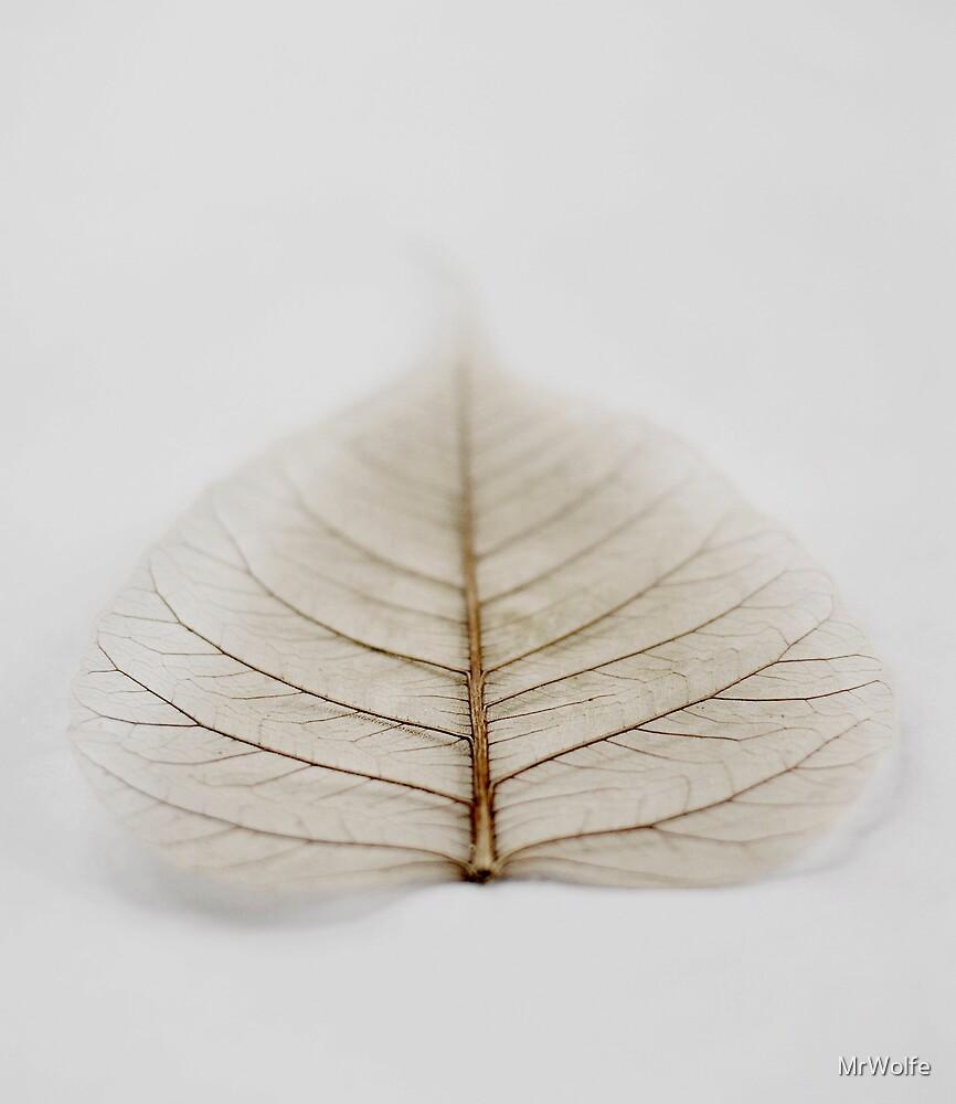 leaf by MrWolfe