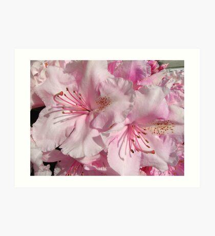 Pink Abundance Art Print