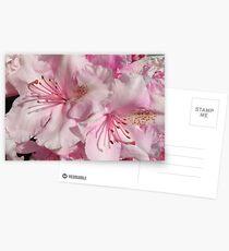 Pink Abundance Postcards