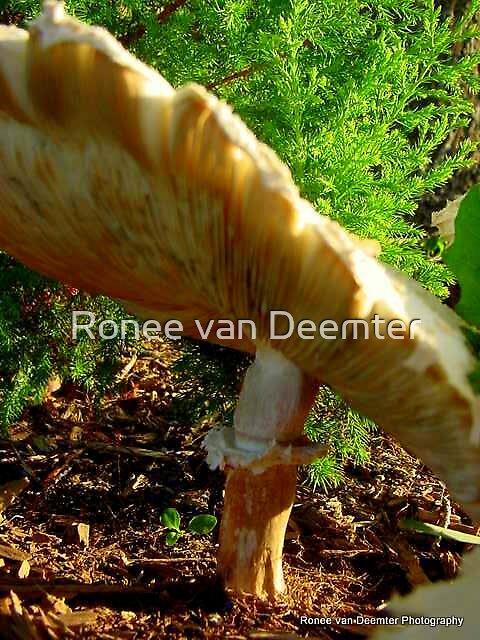 Senor Mushroom by Ronee van Deemter