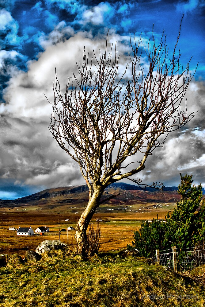 Windswept by Andrew Robertson