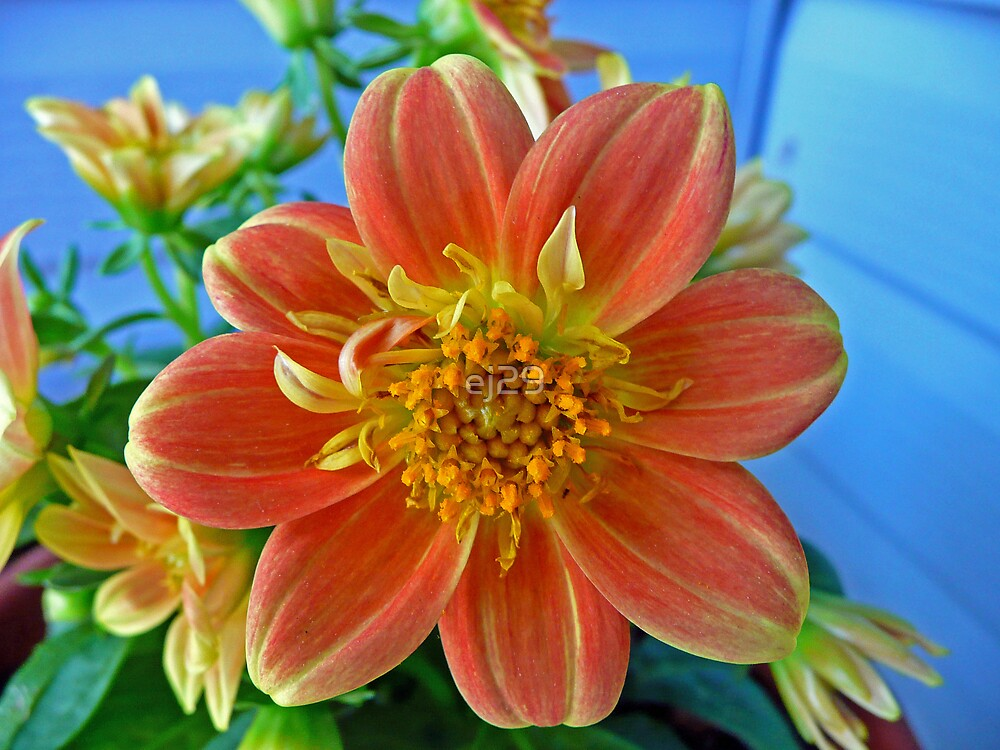 Pretty In Orange by ej29