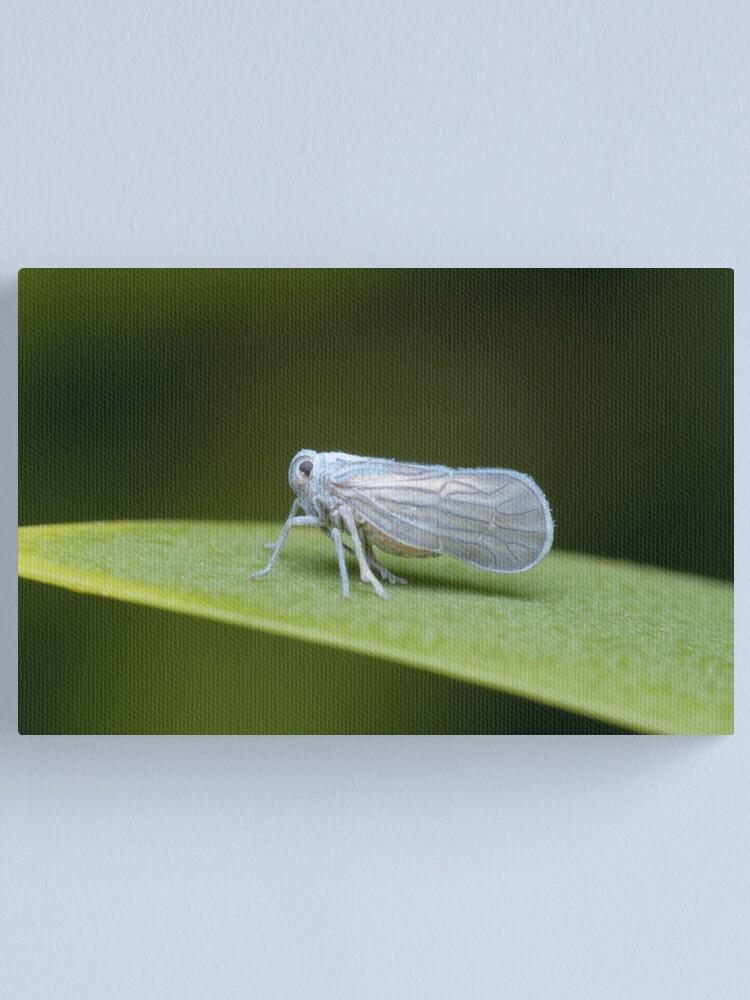 Alternate view of Leafhopper Canvas Print