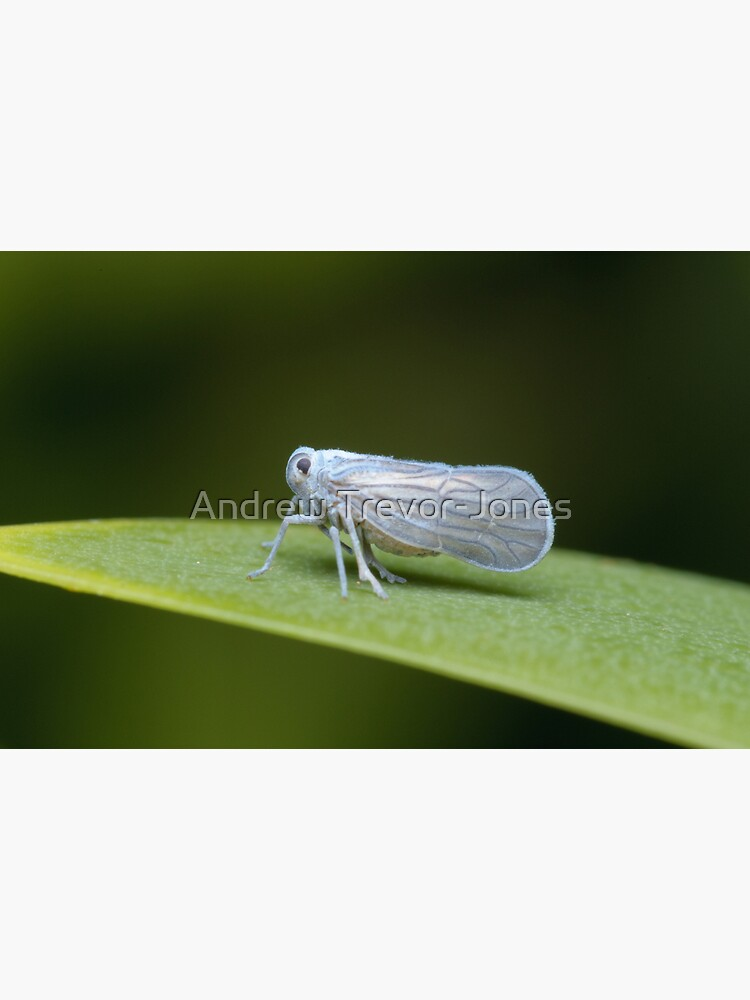 Leafhopper by andrewtj