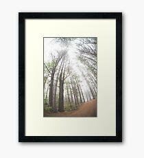 Misty Morning Trees Framed Print